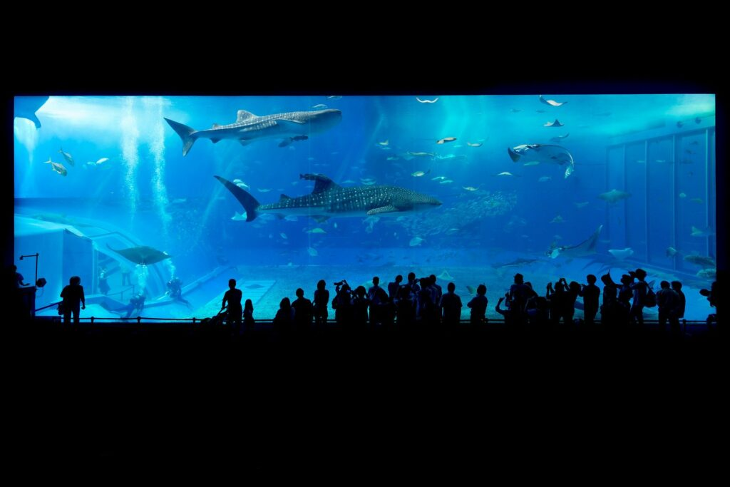 virtual museum and aquarium tours to watch from home with your kids